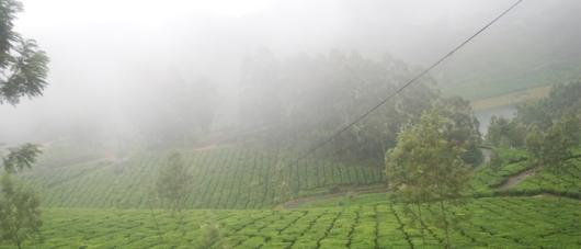 misty-munnar